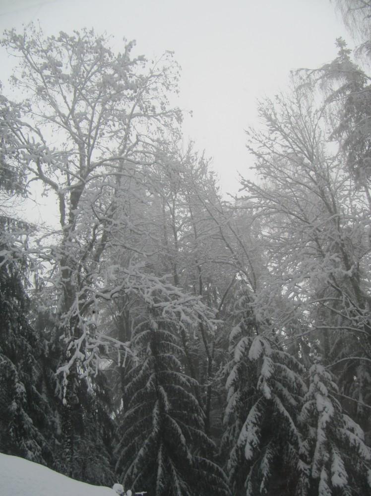 Au pays du Mont Blanc (4/6)